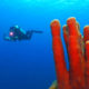 Exciting Diving Sites in Dominica