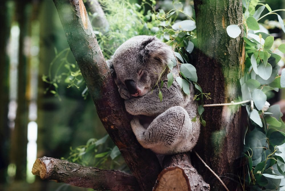Great Vacations on How You Can Help Out in Australia
